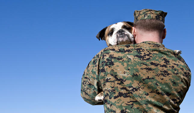 Allow PTSD and Other Service Dogs in Your Hospitals!